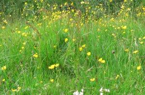 Gröna hagar med biologisk mångfald.